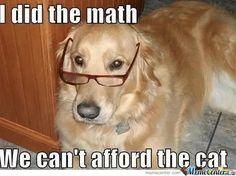 Math Dog  | Visit http://gwyl.io/  for more diy/kids/pets videos
