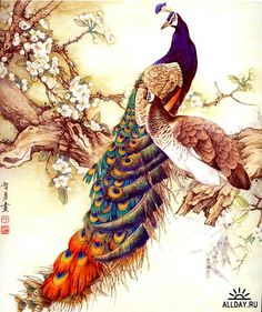 Peacock Painting 1 by Aubryknight, via Flickr