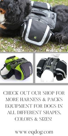Check out our online shop for more off our outstanding dog equipment! Walking Equipment, Dog Walking, New Toys, Dog Owners, Green And Grey, Your Dog, Lovers, Gift Ideas, Check