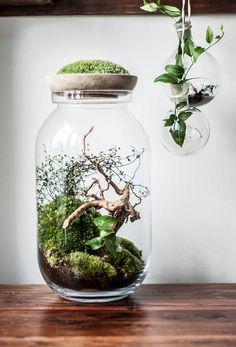 Arch/tecture - blog pełen designu!: Design: Las nabity w butelkę!