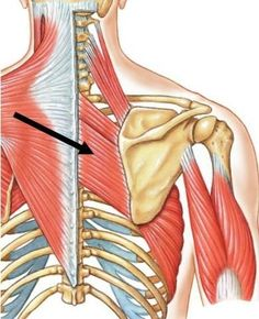 How to Relieve Pain Between the Shoulder Blades – Lat and Rhomboid Release – Mobility Mastery – Yoga Club Shoulder Pain Relief, Neck And Shoulder Pain, Back Pain Relief, Neck Pain, Sore Neck And Shoulders, Sore Shoulder, Shoulder Blade Muscles, Shoulder Blade Stretch, Stretches For Shoulder Blades