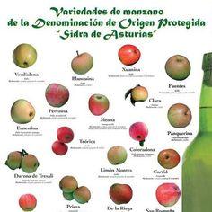 Variedades de manzano de la Denominacion de Origen Protegida Sidra de #Asturias