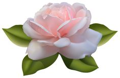 Beautiful Pink Rose with Leaves PNG Image