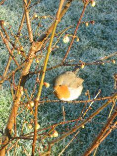 A robin in the Dublin Botanic Gardens. Visit www.botanicgardens.ie