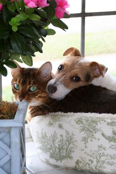 Jack Russell and kitty friend
