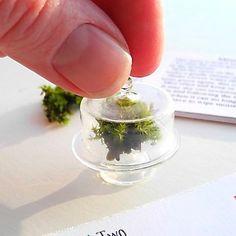 Miniature Moss Garden Terrarium Kit with Glass Cloche with Cylinder Shape Lid