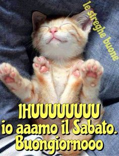 Happy Smile, Cat Memes, My Friend, Friends, Good Morning, Kitten, Humor, Funny, Animals
