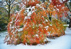 Sudden visitor in autumn