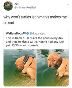 Cute Little Animals, Cute Funny Animals, Funny Cute, Funny Animal Memes, Funny Dogs, Cute Puppies, Cute Dogs, Dog Rates, We Rate Dogs