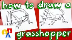 Awesome, we're going to be doing a bunch of insect drawings this week, starting off with this super cool grasshopper! INSECT WEEK How to draw a daddy long le. Art For Kids Hub, Art Hub, Bugs Drawing, Bug Art, Arts Ed, Bugs And Insects, Learn To Draw, Easy Drawings, Art Lessons