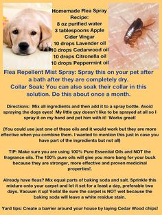 Dog Grooming Clippers FLEA REPELLENT (knock on wood) seems to be working wonderfully with no Frontline! Grooming Clippers FLEA REPELLENT (knock on wood) seems to be working wonderfully with no Frontline! Labrador Retriever, Golden Retriever, Dog Care Tips, Pet Care, Tick Repellent For Dogs, Flea Repellant, Homemade Flea Spray, Homemade Dog, Dog Flea Remedies