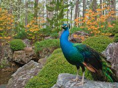 Botanical Garden Photos - Videos of Gardening - Garvan Gardens, Arkansas~~~Beautiful!