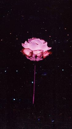 This is from the Shawn Mendes tour ughh this is so pretty ❤️❤️❤️ Natur Wallpaper, Wallpaper Free, Flower Wallpaper, Wallpaper Backgrounds, Iphone Wallpaper, Shawn Mendes Tour, Shawn Mendes Quotes, Shawn Mendes Imagines, Shawn Mendes Tumblr