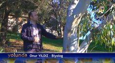 Okaliptüs ağacı dünyanın en çok su tüketen ağaçlarından bir tanesi. Bu ağaç diğer bitkilere nazaran çok fazla su tükettiğinden dolayı özellikle bataklık kurutmak istenen bölgeler de yoğun ekimleri yapılır. http://www.a9.com.tr/…/Bilim-Yolunda/Bilim-Yolunda---2---Bi…