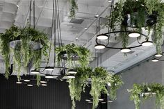 Showroom Of Fragile Garden Furniture - Picture gallery