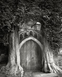 The Most Ancient and Magnificent Trees From Around the World | The Sentinels of St. Edwards. Stow-on-the-Wold, England, 2005. Planted sometime in the 18th century, these two yews are probably survivors of a celebrated, formal avenue that led to the door of the church.    Beth Moon  | WIRED.com