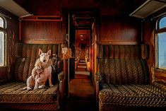 project by Dutch photographer Alice van Kempen