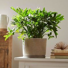 Monstera and Split-Leaf Philodendron: Is There a Difference Between the Two? Monstera and Split-Leaf Philodendron: Is There a Difference Between the Two? Air Plants, Indoor Plants, Indoor Orchids, Terrarium Plants, Orchid Terrarium, Mini Terrarium, Spider Plants, Bathroom Plants, Gardens