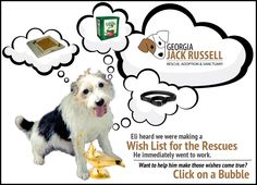 Amazon Wish List for Jack Russell Rescues