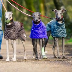 Wonderful Whippet Dog Coat Patterns - why not make them all a snazzy new coat! www.redhoundfordogs.com