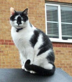 Street Mogs - a postman's blog of all the cats he meets on his rounds. =) love this.
