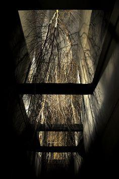 The World Upside Down, Giuseppe Licari.