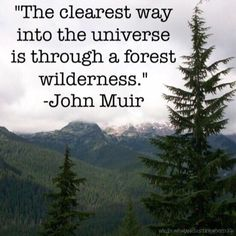 "Life Quotes From Famous Authors That Prove Everyone Has Bad Days ""The clearest way into the universe is through a forest wilderness."" —​ John Muir""The clearest way into the universe is through a forest wilderness. Famous Literary Quotes, Famous Author Quotes, Good Life Quotes, Quotes To Live By, Natural Life Quotes, Peace Quotes, Quote Life, Happiness Quotes, Phrase Cute"