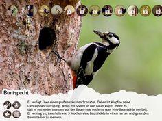 Kinder Apps Vogelatlas iPad iPhone