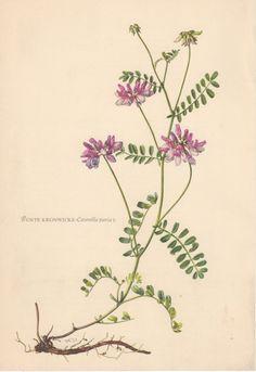 Botanical Art on Pinterest   Botanical Illustration, Botanical ...