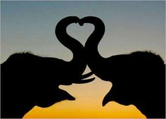 Image result for elephants making heart