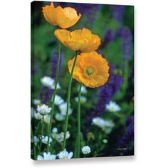 ArtWall Kathy Yates La Playa Poppies Gallery-wrapped Canvas, Size: 24 x 36, Yellow
