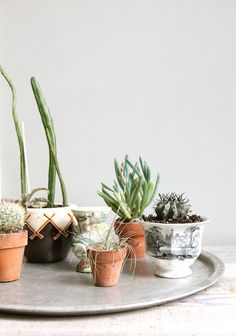 Vintage pots add rough-hewn charm to simple houseplants.