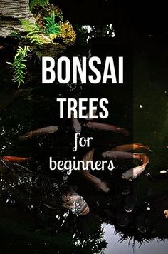 Just getting started? This list of beginner trees for bonsai is a good place to start. It will tell you which bonsai are easy