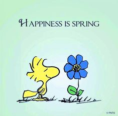 Happiness is spring Snoopy Peanuts Quotes, Snoopy Quotes, Peanuts Cartoon, Peanuts Snoopy, Peanuts Comics, Snoopy Und Woodstock, Woodstock Bird, Peanuts Characters, Charlie Brown And Snoopy