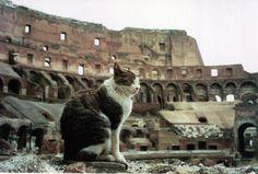 Gato no Coliseu em Roma