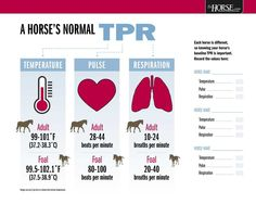 One of the first things horse owners check when their horse shows signs of trouble is temperature, pulse, and respiration (TPR). Order this poster now and have the normal ranges at your fingertips in
