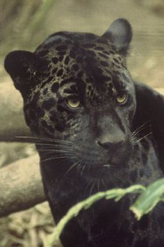 seriously? you wanna name me spot?! that the best you could come up with?  Jaguar