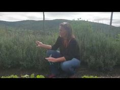 Organic Lavender Tip on Earthday from Free living Earth Day, Lavender, Organic, Videos, Tips, Free, Counseling
