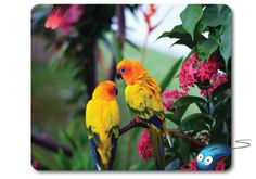 Two colorful parrots wonderful beautiful - inside flowers and leaves.