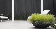 Low bowl with grasses www.jamesrosslandscape.com.au