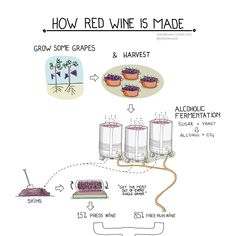 Image associée Wine Making Process, Red Wine, Alcohol, Image, Liquor