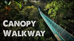 World's Largest Rainforest Canopy Walkway - Virtual Tour