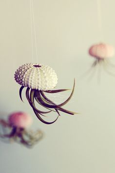 shell/airplant jellyfish.... OMG. Best idea ever.
