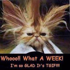 TGIF.  I so feel this way this week.