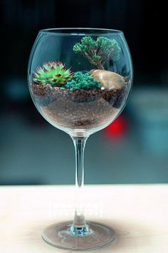 If you still do not have a terrarium in your home, this will be your time to do it. You can find many terrarium ideas as they are really present in most Cacti And Succulents, Planting Succulents, Planting Flowers, Flower Gardening, Garden Terrarium, Succulent Terrarium, Succulent Ideas, Glass Terrarium, Succulent Containers