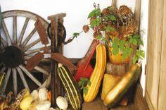 収穫も料理のひとつ|PAPERSKY food club