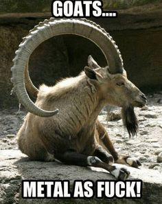 #goats #metal