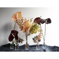 All the anthurium! Floral Style, Floral Design, Garden Plants Vegetable, Dried Flowers, Flowers Vase, Arte Floral, Bud Vases, Flower Photos, Pretty Flowers