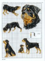 Gallery.ru / Фото #24 - Picture Your Pet in Cross Stitch - patrizia61
