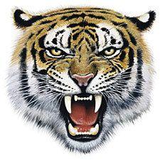1349973456_Tiger_Bite_A9689D.jpg (225×225)
